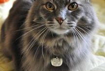 Tagged Up Pets / Share a picture of your Trupanion-insured pet with us to be featured! socialmedia@trupanion.com