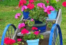 Gardens and plants / jardins e plantas / Inspirational ideas for gardens / by MJM