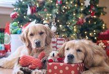littlefriends / little friends, animals, cute animals