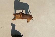 Luv Doxies / by Christina Crawford