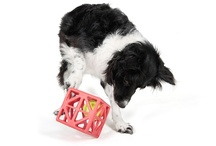 The Border Collie Brigade / Border Collies, pet supplies, dog stuff / by Karen Bernstein