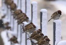 BIRDS / by Susie Fellner