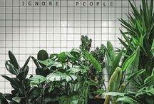 { f l o r a l e v e r y t h i n g } / { I'd live in a greenhouse if I could. Instead I have this board. x-Dallas  } more at dallasshaw.com / instagram.com/dallasshaw