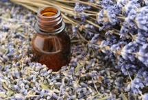 Herbal 101 / by Regina Hale