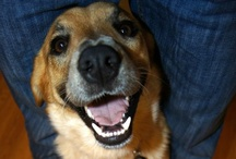 Doggy Happy Tails! / Dogs we love that have been adopted from OK Humane! / by Central Oklahoma Humane Society