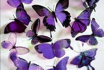 Butterflies..... / by Heather Brockhaus