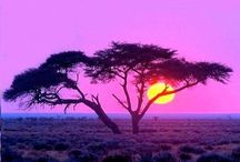 Africa / by Tanya Masterson