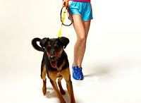 Zensah | man's best friend / Love exercising?  Why not do it with your dog!