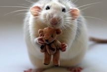 djur. / animals. cut. fluffy, big. smal. tiny. sweet.
