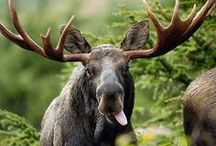 Awesome animals / Some of my favourite animals and wildlife from my travels or otherwise...