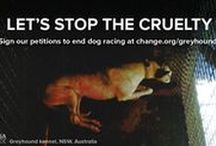Greyhound Advocacy / If you love protecting greyhounds like we do, follow this board.