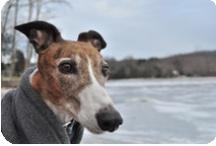 Greyhound Adoption Groups