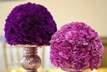 My obsession with purple carnations