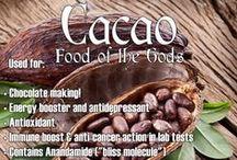 Cacao Health Benefits