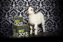 Best of Sarasota 2013 / by Sarasota Magazine