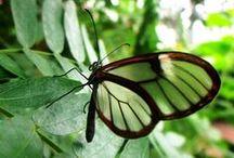 Butterflies / All about Butterflies! / by Lewis Ginter Botanical Garden