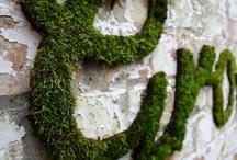 Moss / by Lewis Ginter Botanical Garden