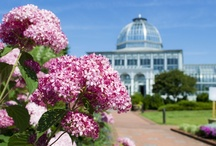 Blooming at Lewis Ginter Botanical Garden