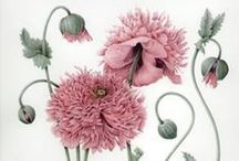 Botanical Illustration & Art