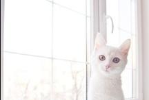 Kitty Cat / by nuninu3
