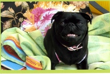 Josie the pugnacious PUG & her friends / by Rose Cerato