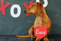 Doxie luv! / by Shannon Taylor