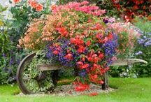 Garden Can't Contain It / container gardening