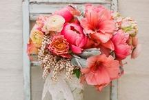 Flowers & Gardens / by Mareen Ishak