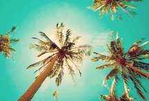 Book my ticket! / Anywhere with palm trees would be good.