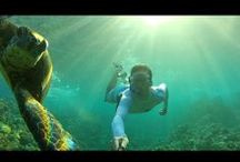XShot TV: WATER / Awesome self videos made by XShot users : diving, snorkeling, bodysurfing and more... Thanks guys for sharing you fun times with your camera extender! Get in the picture!  / by XShot