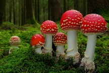Mushrooms, ferns and forest dwellers