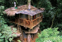 TreeHouses & Camping