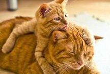 Cats I Love / by Deborah Reid