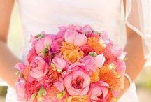 Corals, Pinks & Oranges