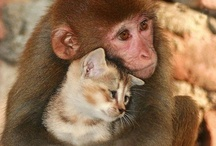 Critter Love / by Elaine SomeCallMeRed