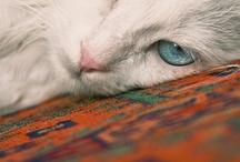 Crazy Cat Ladies Club / by Elaine SomeCallMeRed