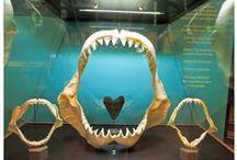 Exhibits / Natural history of the Santa Barbara Region