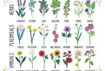 Gardening and Growing / by Samantha Lloyd Bruchie