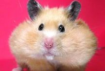 Furry Friends / Adorable animals that will captivate your heart.