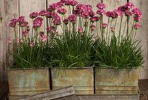 recycled garden design / Garden beds and planters created from recycled timber, natural and household items