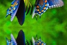 Flowers & Butterflys