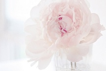 ♥ FLOWERS! ♥ / by ✮ STIJL!  bij Willeke ✮