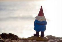 Gnomes & Toadstools
