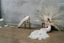 White Plumage Inspiration