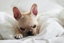 Animals / My love for animals big and small. #animals #pets  / by Molly Brown @Make Today Lovely
