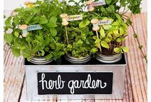 House-spirations: Outdoor Spaces & Garden / CREATE YOUR ESCAPE WITH A DREAMY GARDEN & A FABULOUS ENTERTAINMENT SPACE OR SPICE UP YOUR LIFE WITH A CONTAINER HERB GARDEN For more inspiring ideas check out my House-spiration boards!
