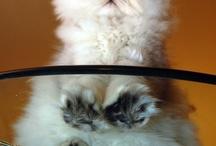 Cat Pics / by Cynthia Sawyer