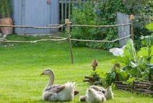 Farm Living...