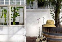 Garden Thyme...