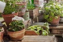The Potting Shed...